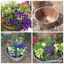 Half Barrel Planter by Everchanging And Portable Flowering Wine Barrel Wine Barrel