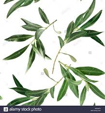 a seamless pattern with olive tree branches on white background