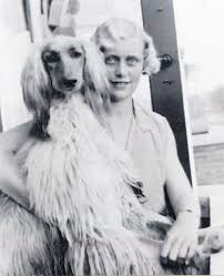 afghan hound breeders victoria history eta pauptit and the vdom afghan hounds