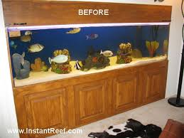 8 foot artificial coral reef tank with salt water fish