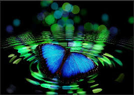 Blue And Green Butterfly - butterfly meaning spiritual thrive on spiritual magazine