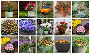container gardening ideas for beginners backyard garden lover
