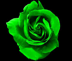 green roses green by genesis19 on deviantart