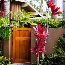 Tropical Plants Pictures - cool tropical plants want to be able to indentify plants with