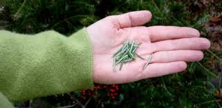 how to recycle a christmas tree today u0027s homeowner