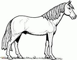 horse coloring pages printable find this pin and more on horses