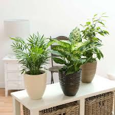 plante d駱olluante chambre sélection des plantes dépolluantes pour assainir intérieur