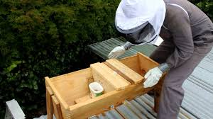 How To Feed Your Bees And Treat For Varroa In A Top Bar Hive Youtube