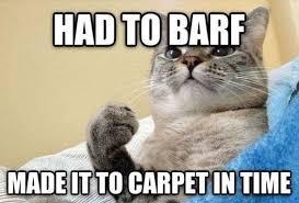 Weird Cat Meme - top 40 funny cat memes 2 funny cats quoteshumor com