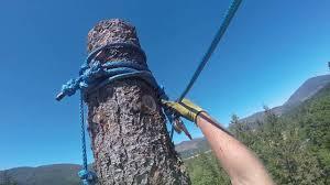 heavy rigging zipline speed line tree work arborist youtube