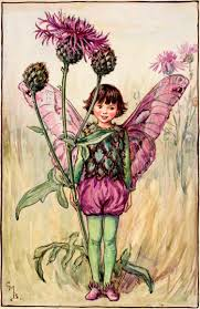 the greater knapweed fairy flower fairies