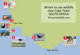 Map Of Cape Town South Africa by Take A Wildlife Safari Cape Town Style Travel For Wildlife