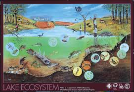 Types Of Community Gardens - all types of ecosystems ecosystem a community and its habitat an