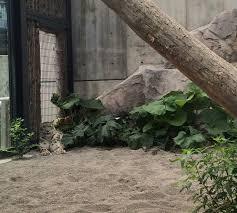 see hokkaido maruyama zoo u2013 laarni does