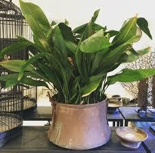 house plants no light 15 best low light houseplants to grow indoor