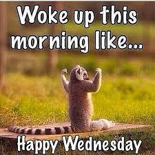 Wednesday Meme - woke up this morning like happy wednesday wild things