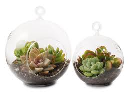 succulent terrarium you can look plants in glass bowl you can look