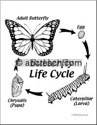 life cycle coloring page