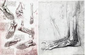 He Made Accurate Drawings Of The Human Anatomy Leonardo Da Vinci U0027s Inventions The Inventions Of The Greatest