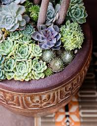 container designs with succulent plants sunset