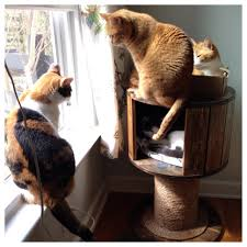 cool cat scratching post best 25 scratching post ideas on