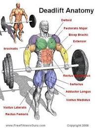Full Body Muscle Anatomy One Of The Best Full Body Workouts You Can Do This Is Why