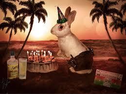 rabbit birthday happy birthday silly rabbit by gobegirl on deviantart