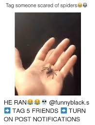 Afraid Of Spiders Meme - funny scared of spiders scared best of the funny meme