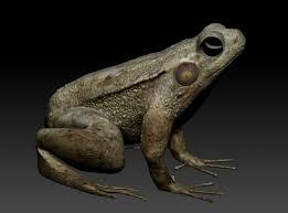 making of frog gv prashanth