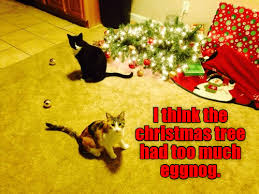 Cheezburger Meme Builder - i can has cheezburger lolcats page 2 funny internet cats