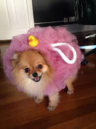 best 25 puppy costume ideas on pinterest cute dog costumes pet