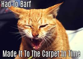 Carpet Cleaning Meme - pet odor removal my trusted carpet cleaners