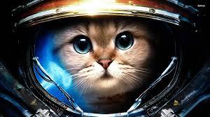 space cat cats wallpaper
