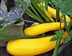 gem se pflanzen balkon gemüse auf dem balkon anbauen wohnen