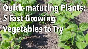 quick maturing plants 5 fast growing vegetables to try youtube