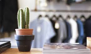 7 splendid reasons to have indoor plants in your home and office