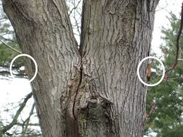 tree support systems vanderbeck tree experts