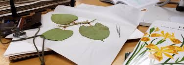 programs natural resources weeds and plant identification what is that weed weedwise program