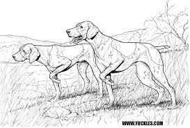 german shorthaired pointer coloring page by yuckles