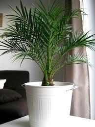 living room plants ikea home design