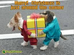 Christmas Dog Meme - christmas is just around the corner