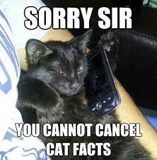 Cat Facts Meme - facts cat memes quickmeme