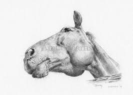 pencil drawings anita baarns