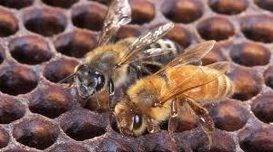 honey bee honeylove part 3
