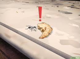 fourmis cuisine 5 ères de se débarrasser des fourmis de façon naturelle