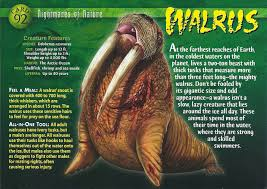 walrus wierd n u0027wild creatures wiki fandom powered by wikia