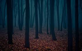 wallpaper tumblr forest tumblr forest background more information