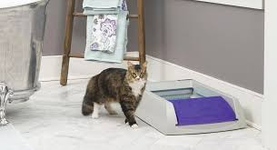 should you buy the scoopfree litter box cool stuff for cats