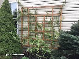 pergola with trellis vertical gardening with trellises arbors and pergolas spotts