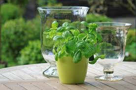 grow a sustainable herb garden indoors nourish the planet